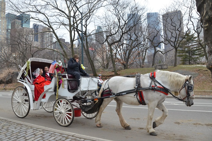 central-park-horse-carriage