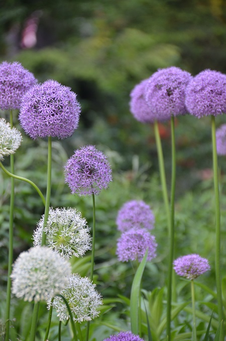shakespeare-garden-may-flowers