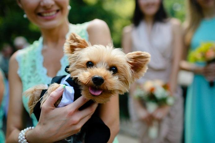 dog-wedding-party
