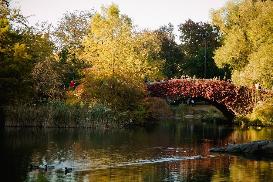 Gapstow Bridge in Central Park covered in fall foliage