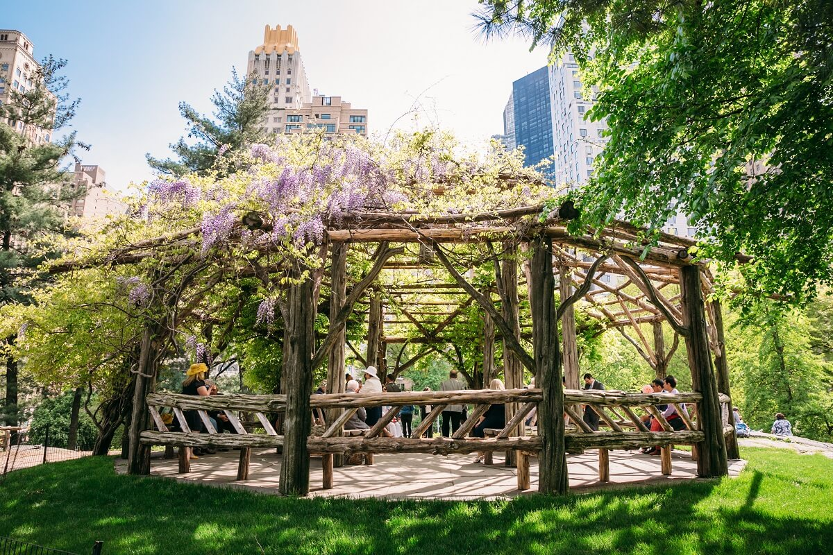 NYC Outdoor Wedding Venues & Locations: Cop Cot Central Park with purple wisteria on canopy