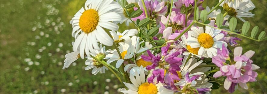 Fistful of Summer Flowers