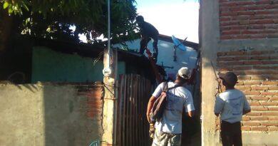 <strong>Guardia Local derrama árbol de mango por petición de vecin</strong><strong>a</strong>