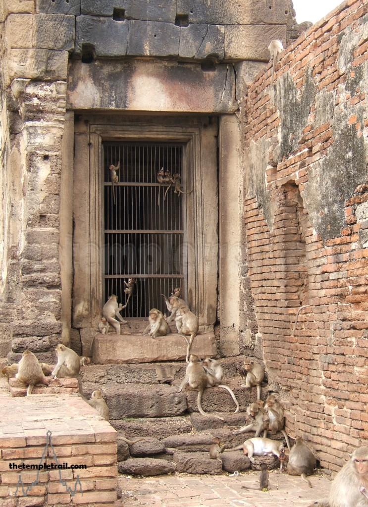 Lopburi Monkeys in Doorway