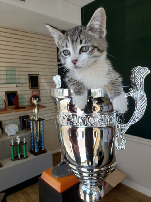 Cup Awards are available in many sizes, also silver or gold. Kitten was found here at our store and adopted into our family.