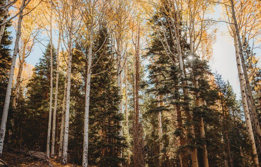 Fall in Flagstaff, Arizona