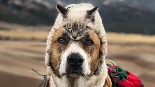 Dog wearing a cat as a hat.