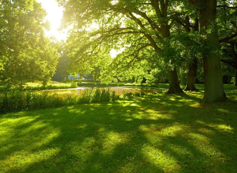 NATURAL STATE BURIAL ASSOCIATION