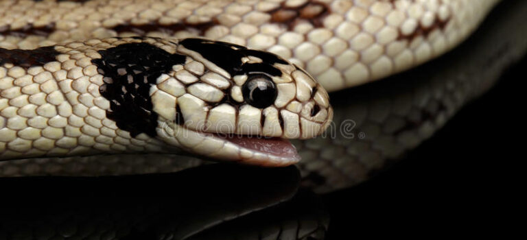 """Colorado Imam: """"Snakes Could be Muslim – Cause Miscarriage or Blindness"""""""