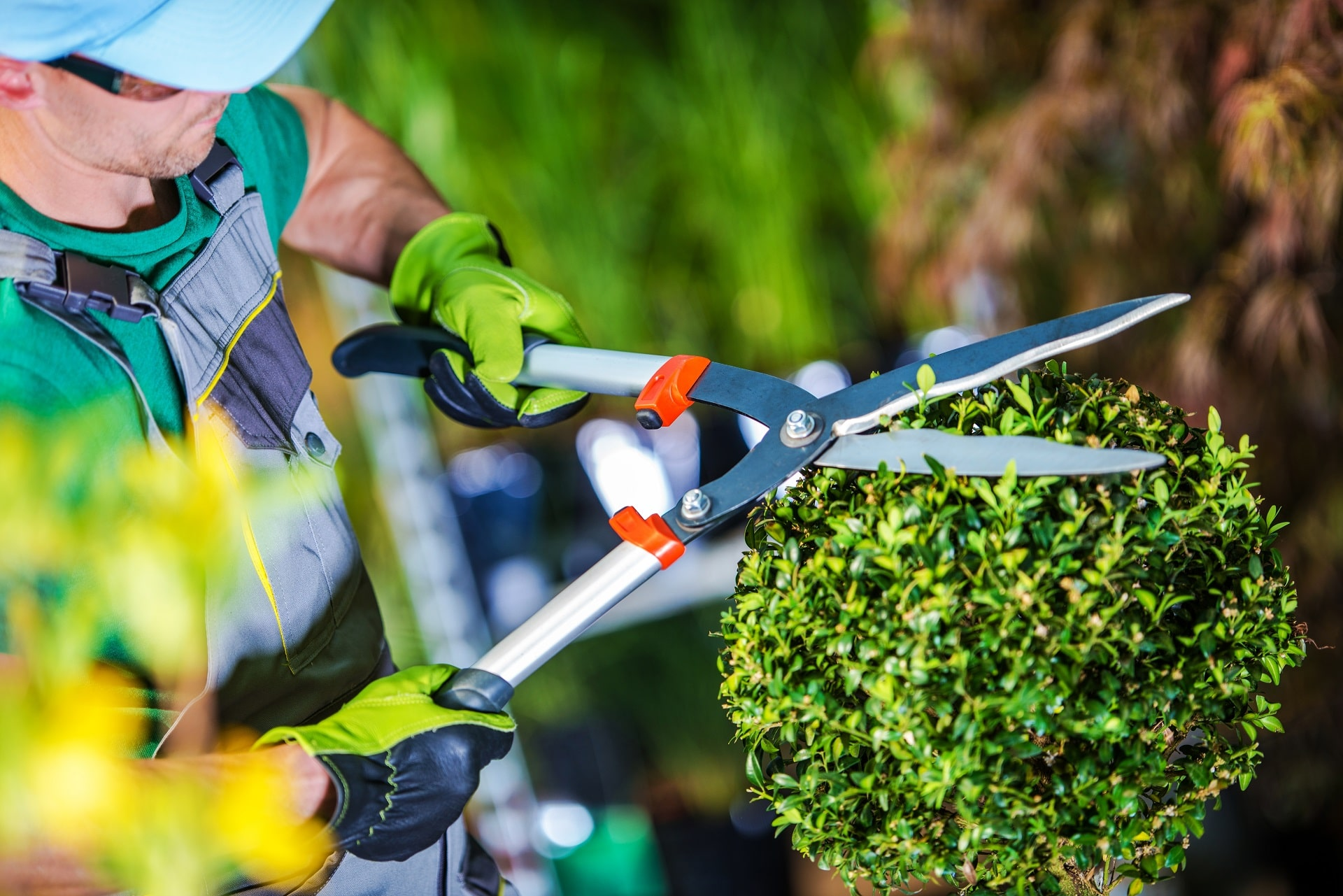 hedge-trimmers-min