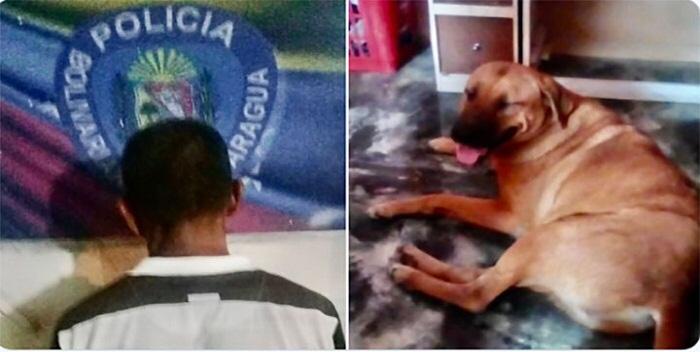 Saab Anunció La Detención De Un Hombre Por Torturar A Un Perro