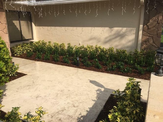 landscaping,Driveway Plants