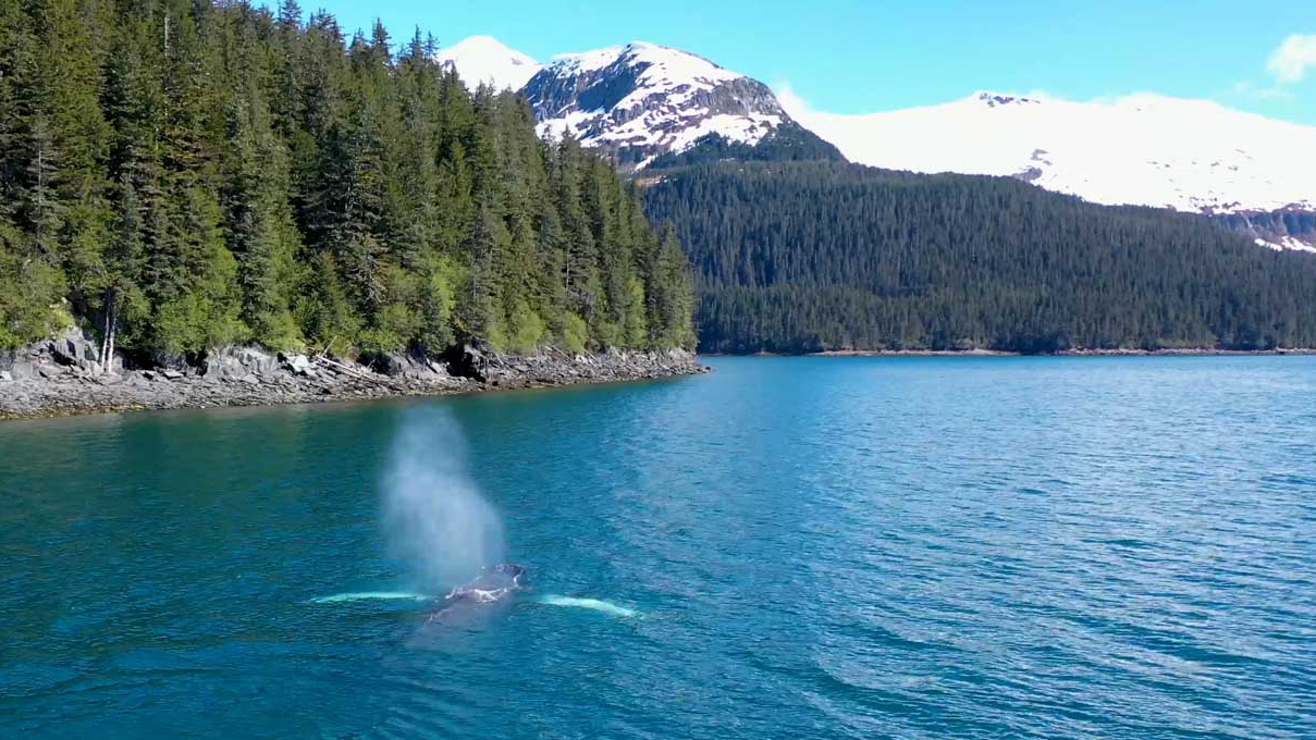 Kayaking with Whales