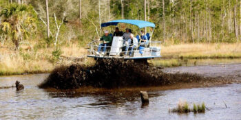 Swamp Buggy Areas