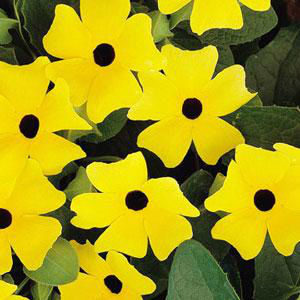 Other Annuals, uncategorized