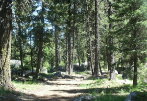 Sacred Sunday Forest Tromp