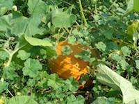 Delicious & Healthy Pumpkin Bisque