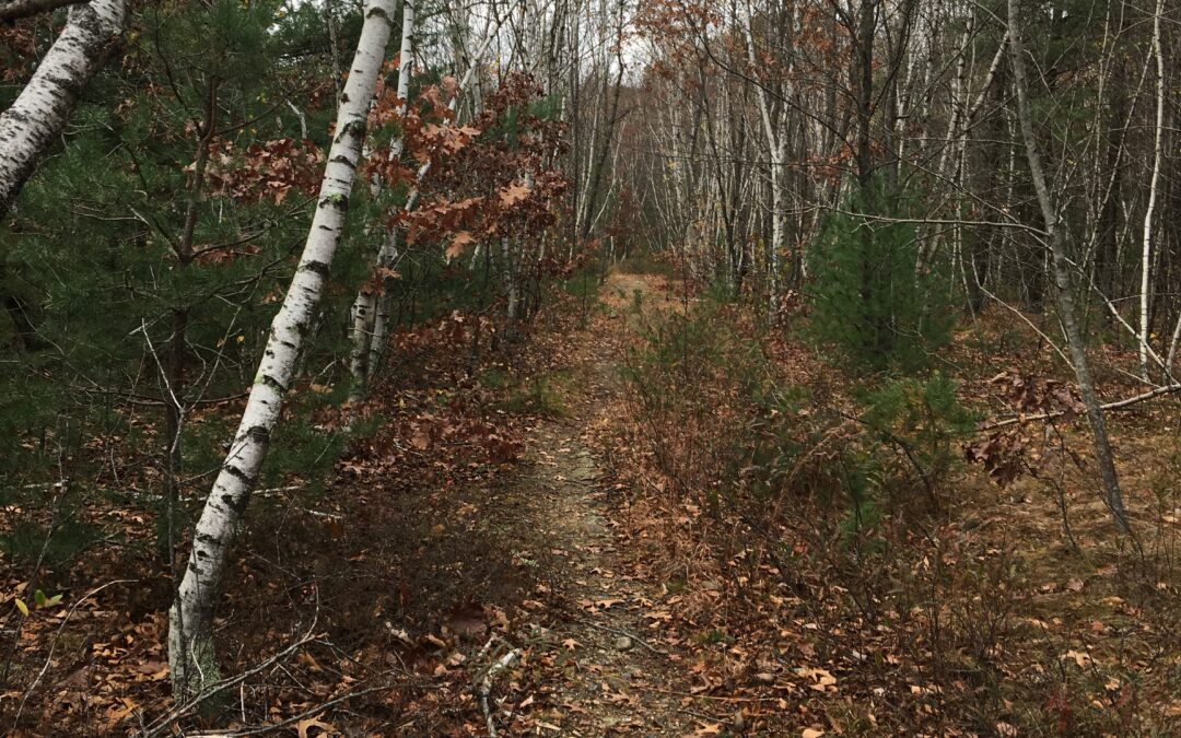 Live Like Thoreau, Guided Walking and Writing
