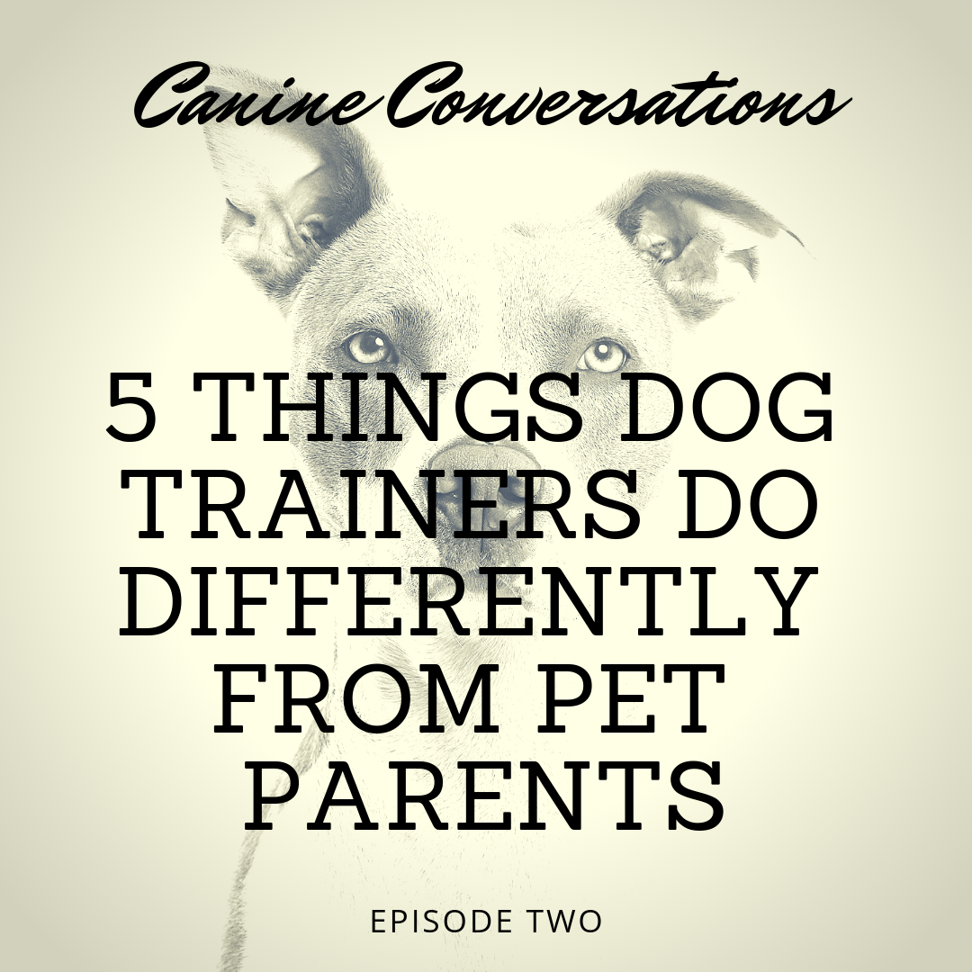 5 Things Dog Trainers Do Differently From Pet Parents