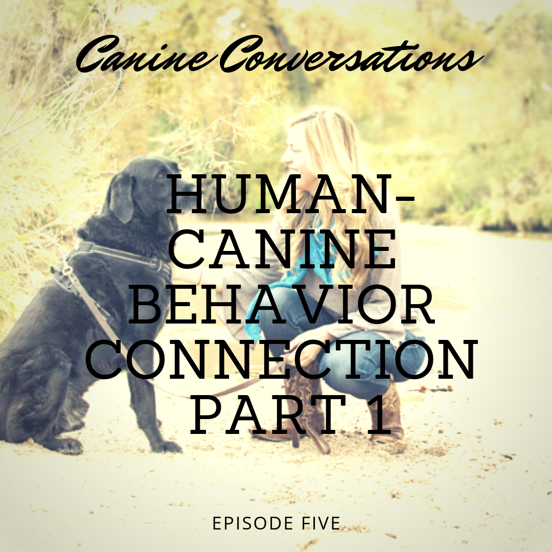 dog training podcast canine conversations human canine behavior connection