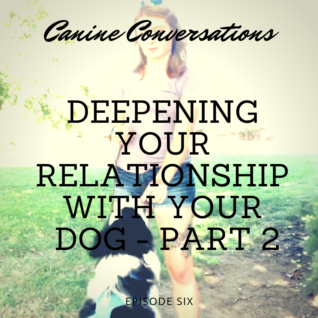 dog training podcast canine conversations deepening your relationship with your dog