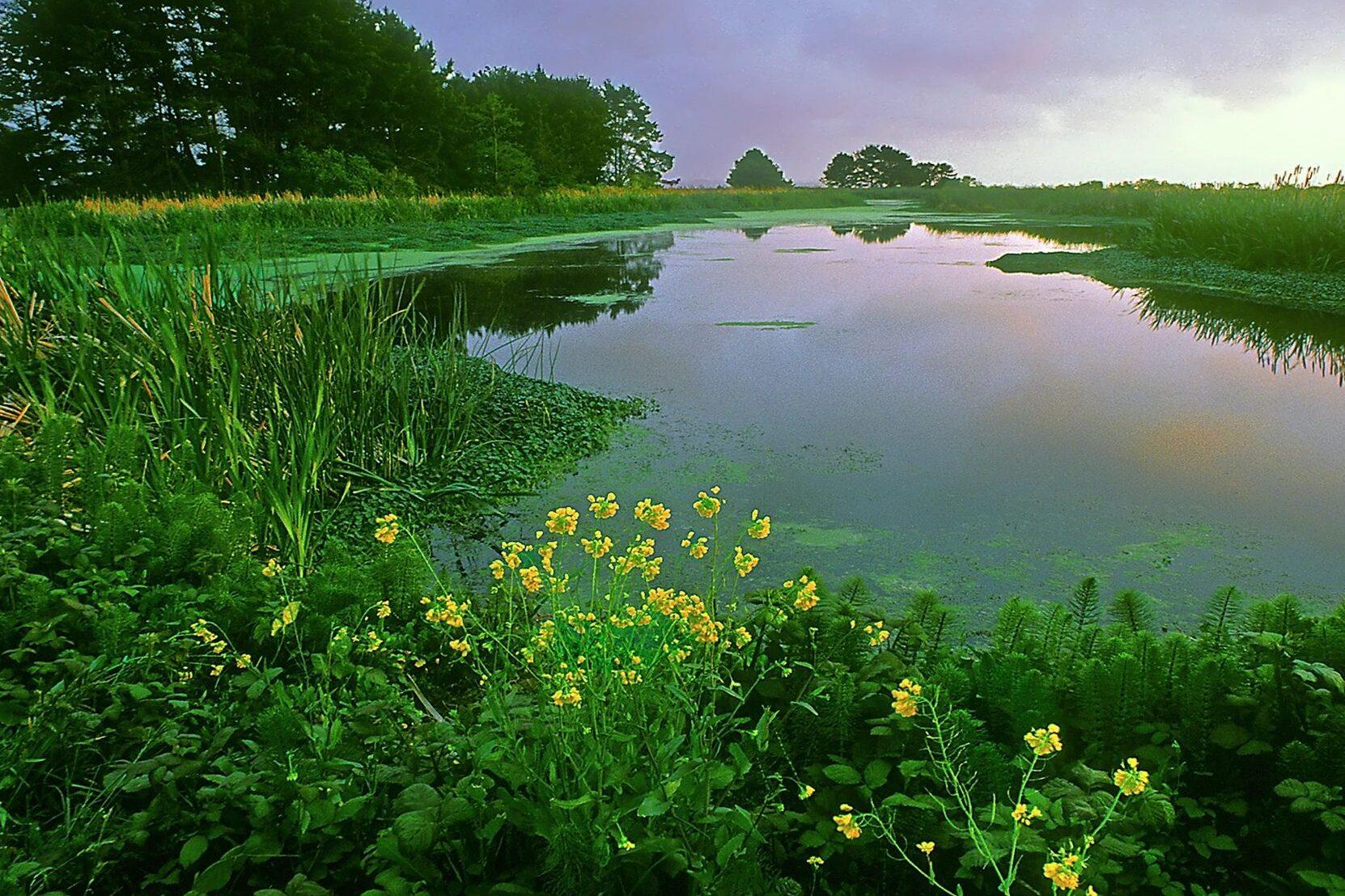 Vegetation in Pond.