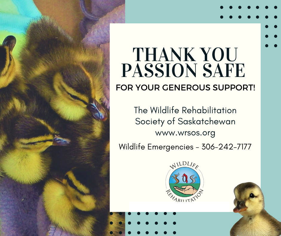 Wildlife Rehabilitation Society of Saskatchewan (WRSOS)