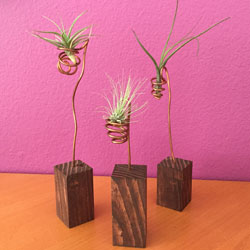 airplant holders, rustic wood, copper airplant holders, artsy airplant holders, rustic decor, airplants