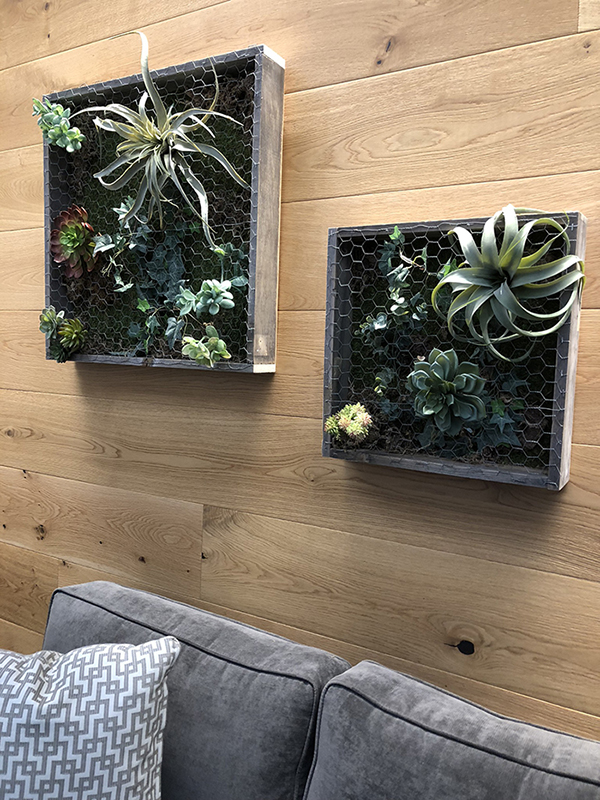 Succulent boxes, air plants, reclaimed wood planter, office live art, interior design, vertical wall garden, office design
