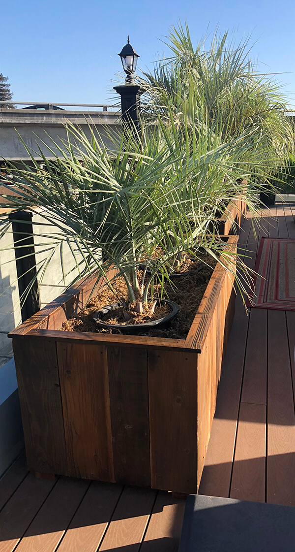 rustic planters, rustic wall planter, custom wood planter, barnwood planter, wall planter, galvanized pots, rustic large planters, reclaimed wood planter, palms, custom planter, custom rustic planter