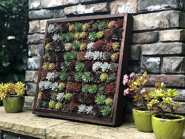 Vertical wall garden, moss logo, living garden wall art, succulents, succulent box, live succulents, living wall art, urban garden studio
