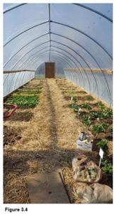 Figure 3.4 - View of inside of greenhouse with varied beds on left and right which are partially planted.