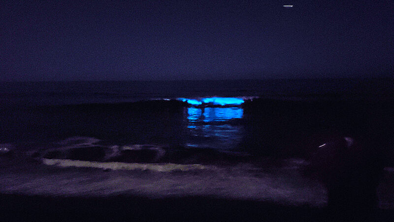 OC Beaches Open Just in Time for Bioluminescence