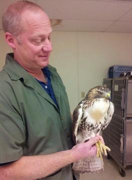 robert owl