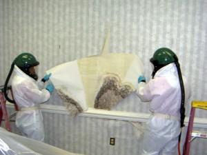 Mold Removal Company Atlanta GA