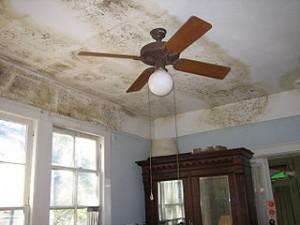 Mold Remediation Services Atlanta GA