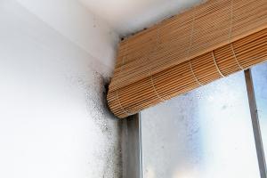 Mold Removal Professionals Alpharetta, GA