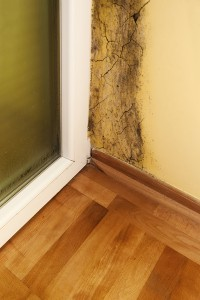 Mold in Homes Atlanta GA