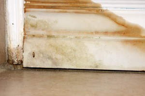 Mold Removal Services Roswell GA