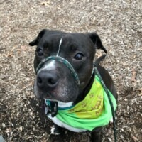 ADOPTED! Benny (225871)