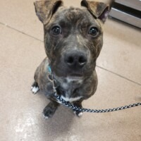 ADOPTED! Baby(226070)