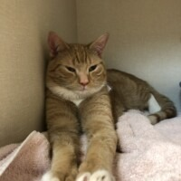 ADOPTED! Ferb(225908) Lancaster- $95