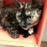 ADOPTED! Janelle (224504)