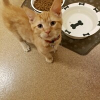 ADOPTED! Leon (223288)