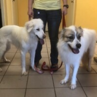 Nana (224798) & Daisy (224797) Reading -  $175 Two dogs for the price of one