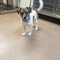 ADOPTED!Scrappy(225882)