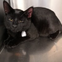 ADOPTED! Toothless (226071)