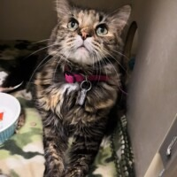 ADOPTED! Willow (225588)