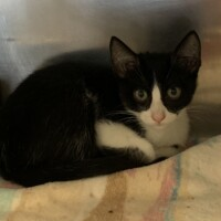 ADOPTED! Captain Jack Sparrow (224492) $95