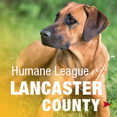Humane League Lancaster County